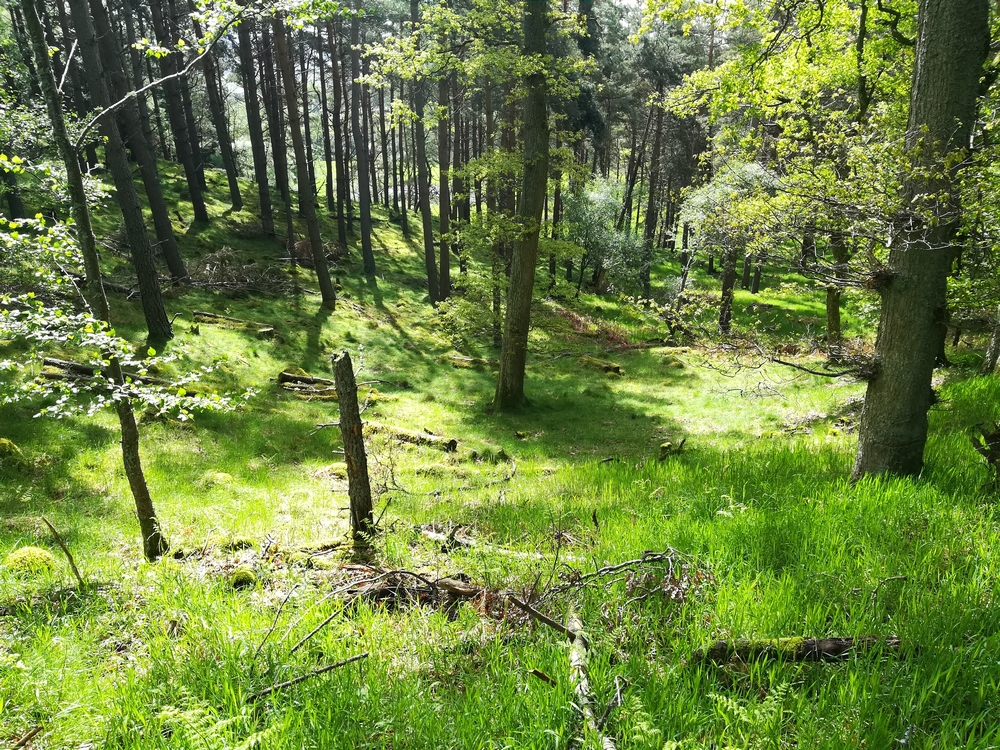 Paysage dans la forêt au pied du Carn Daimh